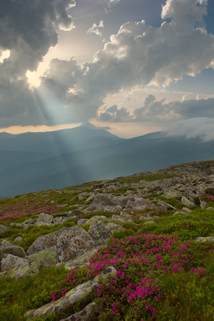 rhododendron flowers in the foreground, dramatic fog after thunderstorm. light through clouds