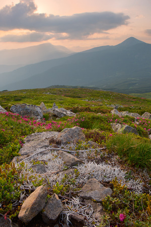 fireplaces: White stones of moss and flowers onthe in the Carpathian Mountains. sunset