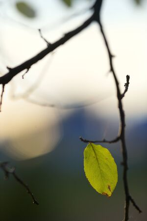 lone leaf on a branch. nicely blurred background Stock Photo