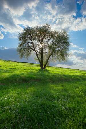 spring; trees; white color; light through trees; good weather days; spot lighting;