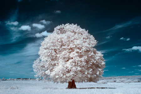 infrared photography. beautiful lonely tree in the sky many clouds. Stock Photo