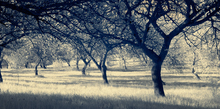 infrared photography, landscape. Trees illuminated light morning contrast