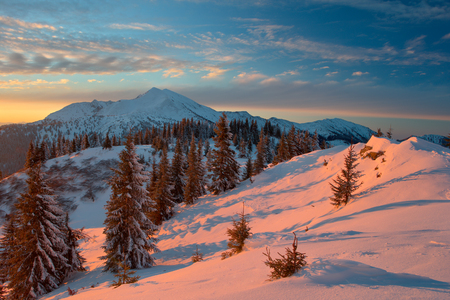 Carpathian mountains in winter, sunrise and sunset, trees covered with white snow, dramatic sky