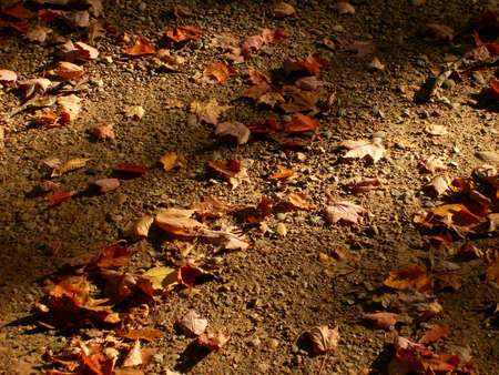 dirt: A background type photo of Fall leaves on the ground. Stock Photo