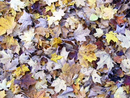 A thick bed of leaves on the ground.