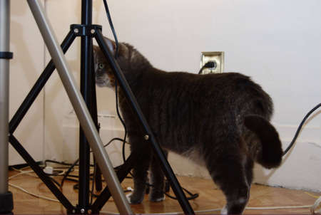 A gray tabby cat wandering among the lightstands.