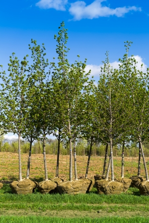 young green leaf trees planting photo