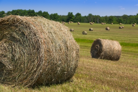 coutryside: hay bales in green coutryside
