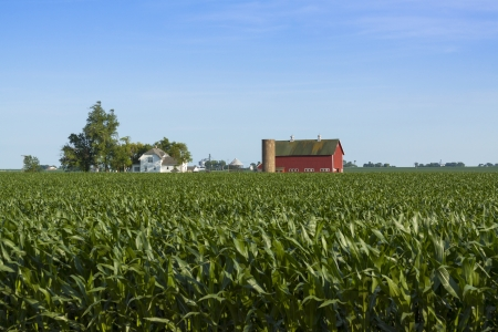 corn crops with red farmhouse photo