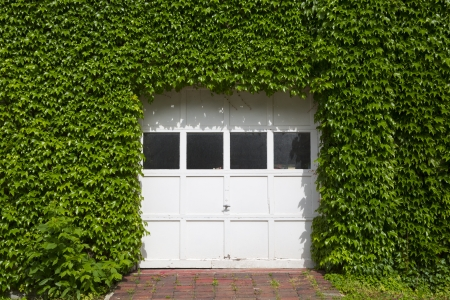 white wooden garage covered with ivy photo