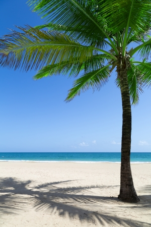 palm tree on a Caribbean white sandy beach