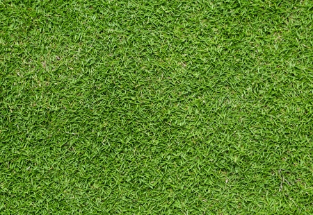 green short thick Bermuda grass lawn background