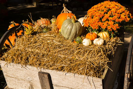 colorful pumpkins and gourds on a wooden barrow on fall harvest farm market photo