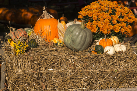 colorful pumpkins and gourds on a pile of hay Stock Photo - 23300724