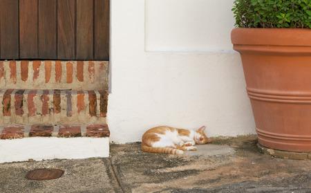 White and orange cat sleeping at the doorstep