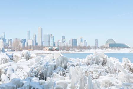 Frozen plantscovered in ice by the lake Michigan in Chicago downtown
