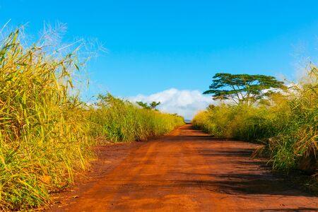 Straight gravel road among tropical bushes 版權商用圖片
