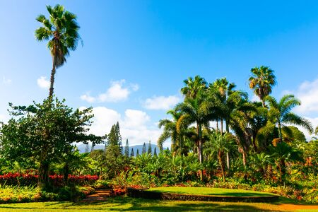 Tropical Hawaiian garden with palm trees and exotic flowers