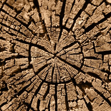 putrid: Cut of an old, rotten tree trunk