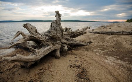 snag: Coast of lake, wood, mouldering snag