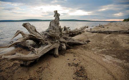 snag: Coast of lake, wood, mouldering snag