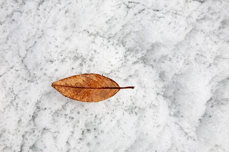 Surface of a spring with leaf Stock Photo - 3367431