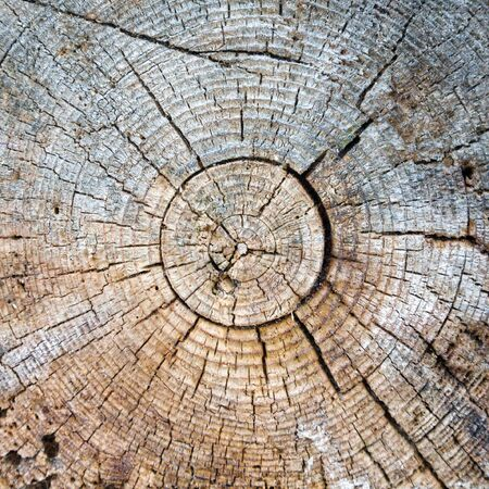 Cut of a trunk of an old tree Stock Photo - 3367466