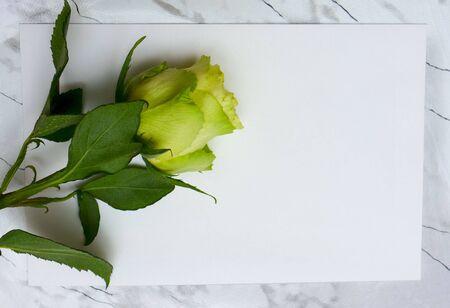roseleaf: Rose flower lying on a blank leaf paper Stock Photo