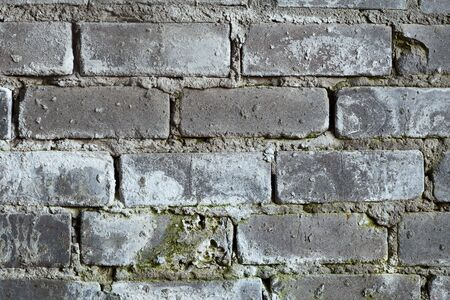 mustiness: Surface of an old brick grey wall with a mold