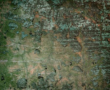 Dark concrete painted old wall background Stock Photo - 5218933