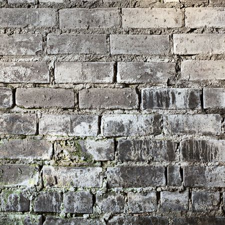 Brick old grunge moldy wall square background photo
