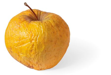 uneatable: Rotten dry disgusting apple on a white background