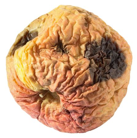 rancid: Rotten dry disgusting apple isolated on a white background