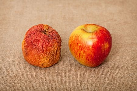 rotten fruit: Two fruit against a canvas - bad and good apples