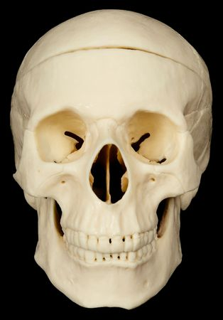 bared teeth: Human skull on black background close up Stock Photo