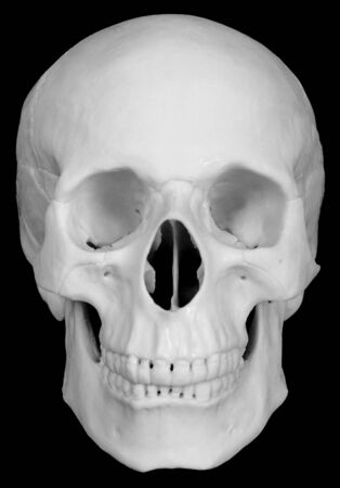 bared teeth: The human skull isolated on black background