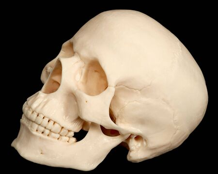 The human skull isolated on black background Stock Photo - 6574547