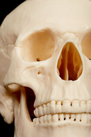 bared teeth: The human skull closeup - front part with teeth