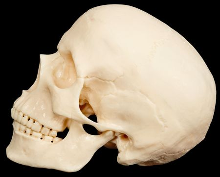 bared teeth: The human skull on a black background in profile