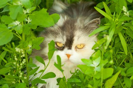 Home furry cat hiding in the grass Stock Photo - 7300619