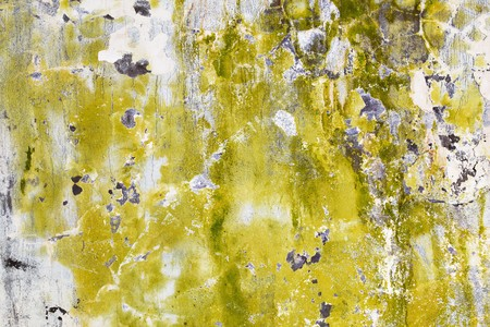 mustiness: Mold and algae on an old dirty wall Stock Photo