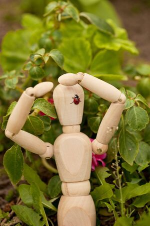 The ladybird sits on the toy wooden man photo