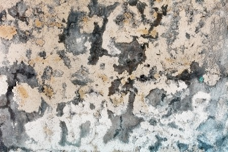 plaster mould: Mold stains on a surface of weather-beaten humid plaster