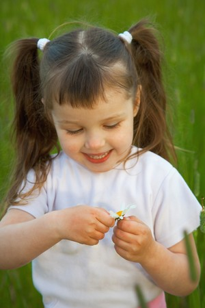 The little girl tears off petals at a camomile
