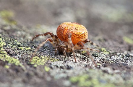 Thick orange spider sits on the surface of the rock Stock Photo - 7693770