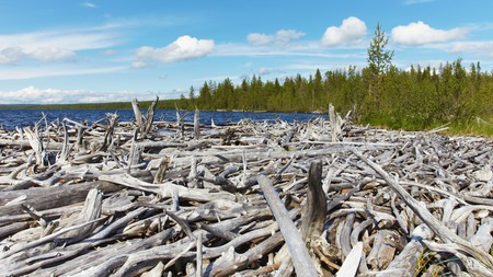 dead wood: Pile of dead wood on the shore of Lake