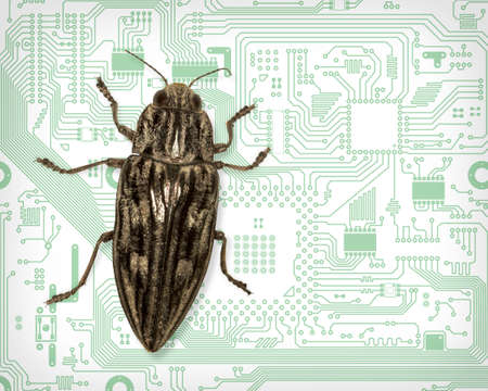 blemish: Beetle symbolizes a computer bug - the collage Stock Photo