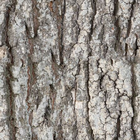 decomposed: The seamless texture surface of the bark