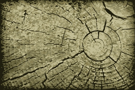 cross section of tree: Realistic vector surface end of the old log - a backdrop