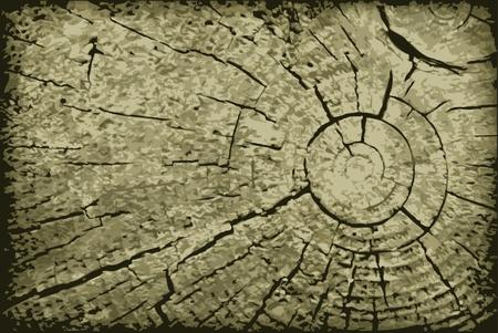 cut logs: Vector realista superficie final del registro antiguo - un tel�n de fondo